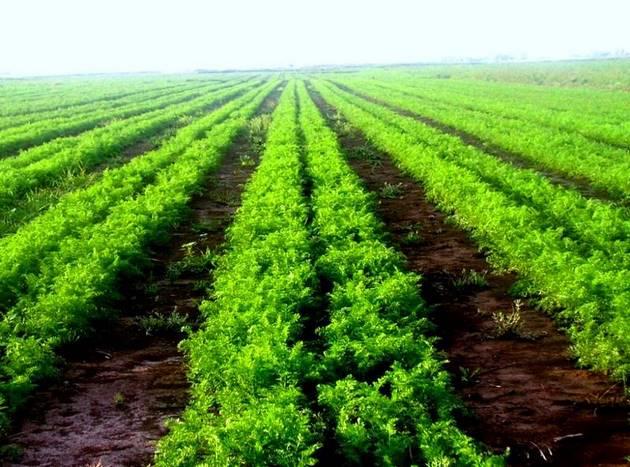 Выращивание овощей на заказ